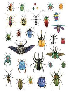 biology dibujos Nature Prints on Behance by Monica Amneus Nature Drawing, Bugs Drawing, Bug Art, Nature Posters, Beautiful Bugs, Illustration Art, Illustrations, Insect Art, Bugs And Insects