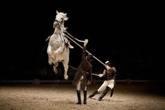 50 Astonishing Animal Photos of 2014A Lipizzan horse is seen during a show of the Spanish Riding School from Vienna, Austria, at the Ziggo Dome arena in Amsterdam, The Netherlands, Nov. 29, 2014.