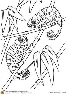 Coloriage Foret De Bambou.374 Meilleures Images Du Tableau Coloriages Animaux De La Jungle Et