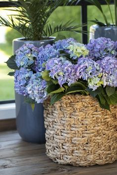 Disse 7 plantene tåler fint å stå i skyggen | Stelletips fra Mester Grønn Wicker Baskets, Garden Inspiration, Planters, Home Decor, Homemade Home Decor, Planter Boxes, Plant, Flower Pots, Decoration Home