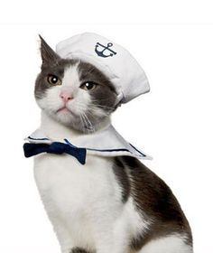 Sailor Halloween costume for cats - because half the point of  having a cat is to dress it up like a jackass