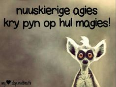 Nuuskierige agies kry pyn op hul magies! Work Quotes, Wisdom Quotes, Afrikaanse Quotes, Funny Qoutes, Best Quotes, Jokes, Inspirational Quotes, Humor, Alex Jones