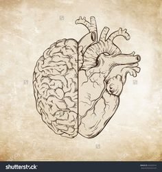 stock-vector-hand-drawn-line-art-human-brain-and-heart-da-vinci-sketches-style-over-grunge-aged-paper-424203316.jpg (1500×1600)