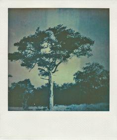 Untitled #1 Polaroids, Pictures, Photography, Painting, Art, Photos, Art Background, Photograph, Fotografie