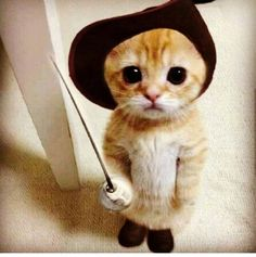 Cute Cats And Kittens Hd Wallpaper Cute Kittens Online Baby Animals Pictures, Cute Animal Pictures, Funny Animal Pictures, Animal Pics, Hilarious Pictures, Fail Pictures, Funny Photos, Funny Videos, School Pictures