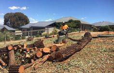 Do you have a Tree or Stump Problem in Brisbane southside ? Need help getting the tree or stump removed? We can also help you with Emergency Tree Removal. #treeremoval #treecutting