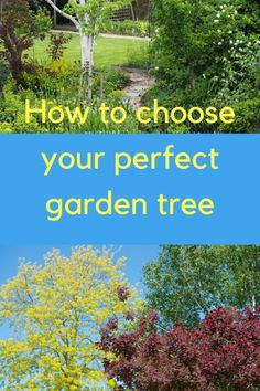 How to choose the right garden tree? I think we all dither over this because trees seem like such a big purchase. More like buying a sofa than buying a. Terrace Garden, Garden Trees, Garden Spaces, Garden Plants, Garden Privacy Screen, Privacy Trees, Forest Landscape, Landscape Design, Low Maintenance Garden Design