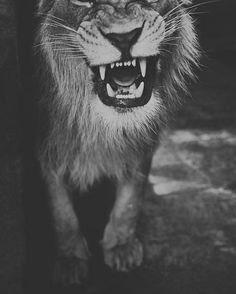 #wrath