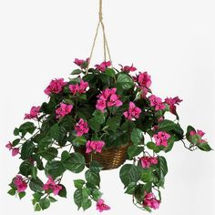 Looking for Nearly Natural 6608 Bougainvillea Hanging Basket Silk Plant ? Check out our picks for the Nearly Natural 6608 Bougainvillea Hanging Basket Silk Plant from the popular stores - all in one. Artificial Hanging Baskets, Small Artificial Plants, Artificial Plant Wall, Hanging Flower Baskets, Fake Plants, Hanging Plants, Artificial Flowers, Flower Planters, Plants Indoor
