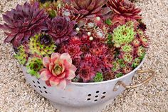 colander as container, with natural drainage. love.