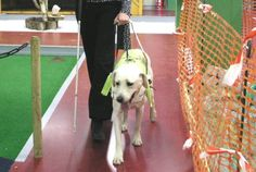 Dubai Airline Refuses To Board Blind Woman's Service Dog! Demand Justice! | PetitionHub.org