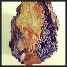 What Is Chaga Mushroom