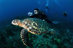 The Blue Hole - Belize- 10 Best Scuba Diving Sites in the Caribbean | Fodor's Travel