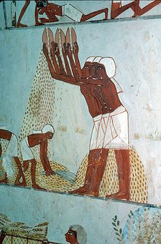 Egypt Thebes, wall painting of winnowing in the tomb of Menna, tomb no 69, circa 1422-1411 BC