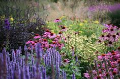 Oudolf magic - create a natural garden which look great but is also a heaven for animals and insects like bees