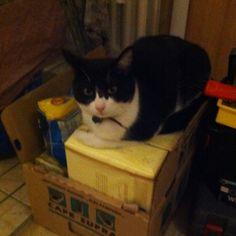 My cat Rio sitting on a box of pasta.