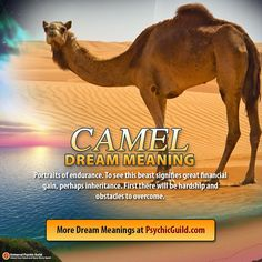 Dig deeper into the meanings and messages behind your #dreams.  #DreamMeaning: Dreaming of a Camel - Portraits of endurance. To see this beast signifies great financial gain, perhaps inheritance...  If you need help interpreting your dreams, ask our experienced #dreaminterpreters. Get advantage of our monthly promo, visit us