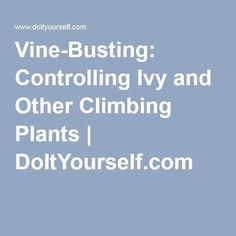 Vine-Busting: Controlling Ivy and Other Climbing Plants | DoItYourself.com - Mod... - Modern Design Ivy Plants, Climbing, Vines, Modern Design, House, Home, Contemporary Design, Mountaineering, Arbors