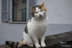 Chat à Caviano (7/25) (2013-04-01 -24)