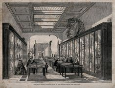 'The British Museum: the Botanical Room, with visitors.', Wellcome Library, CC BY-NC