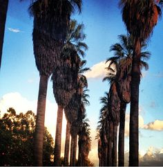 Redlands CA Redlands Pic of the Day by Caitlin Walsh.