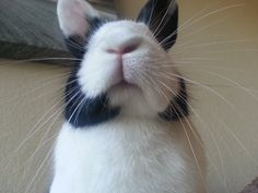 thesweetcatastrophe:  My bunny, Olive…not approving.