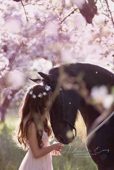 Horse Photo by: Alexandra Evang Photographie. Pink flowering trees and girl in p. - Horse Photo by: Alexandra Evang Photographie. Pink flowering trees and girl in pink dress with flow - Cute Horses, Pretty Horses, Beautiful Horses, Animals Beautiful, Cute Animals, Beautiful Gorgeous, Beautiful Flowers, Beautiful Horse Pictures, Pretty Animals