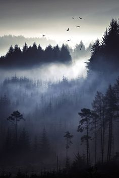 Misty and foggy forest.