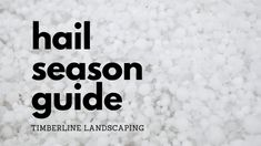 This guide will help you get your plants through hail season. Learn how to strengthen and protect plants before hail strikes. Treat hail damaged plants.