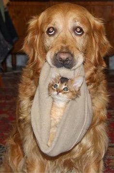 16 provas de que existe amor entre cães e gatos Mais