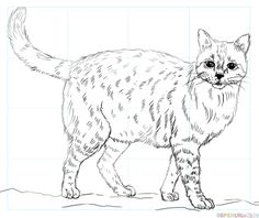 How to draw a Realistic Cat step by step. Drawing tutorials for kids and beginners.