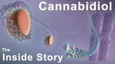 The Inside Story of #Cannabidiol - What are the Benefits of #CBD?