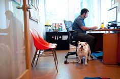 Companies looking to attract and retain younger employees are increasingly offering a coveted perk: letting pets into the office.