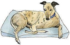 Day 15 - a resting greyhound