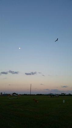 Flying Man Brewing Company https://www.indiegogo.com/projects/flying-man-brewing-company-brewery#/  #craftbeeratx #austincraftbeer #austinbrewery #pflugerville #hanggliding #paragliding #craftbrewer #wingsandbeer #Flying #Man #Brewing #flight #aviation#Texas#freeflight #lifeofadventure #liveauthentic #community #brewery #fly #aviation #soar #soaring #paragliding #beer #austin #texasflying #hangglider #hangglide #getoutstayout #givesyouwing #Wharton #cowboyup #2017 #willswing #2017demodays