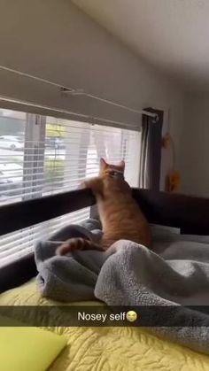 Gato chismoso