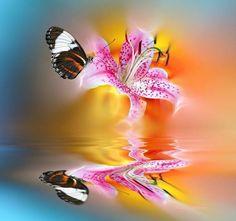 Photo Unconditional Empathy by Josep Sumalla on Butterfly Kisses, Butterfly Art, Butterflies, Jai Ganesh, Outdoor Gardens, Moth, Fantasy Art, Digital Art, Instagram