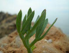 Greek Recipes, Crete, Healing, Herbs, Cooking, Flowers, Plants, Beautiful, Beauty