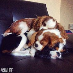 Love :-) .... - Just livin the cavlife