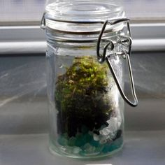 Live Green Moss Mini Terrarium Sea Glass Pebble by welchva on Etsy, $18.95