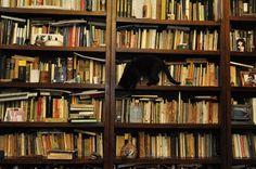 cats + books
