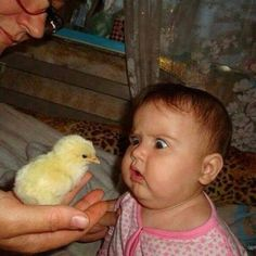 We Love Kids And Everything About Them Pics). Funny photos of kids just being kids. Photos of kids that will make your day. Funny Baby Faces, Funny Baby Pictures, Cute Funny Babies, Funny Kids, Funny Cute, Funny Photos, Baby Photos, Cute Kids, Hilarious