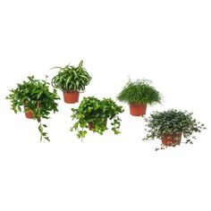 Visit IKEA online to browse our range of garden decoration, and find plenty of home furnishing ideas and inspiration. Succulent Pots, Planter Pots, Succulents, Blooming Flowers, Ficus Microcarpa Ginseng, Potted Plants, Cactus Plants, Indoor Plants Online, Outside Plants