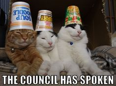 The Council Has Spoken #catoftheday