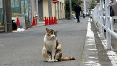 ブチ三毛模様の猫(606)   猫写真-横浜    #猫写真