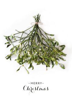 kiss under the sprig of mistletoe - [x-mas] - noel Decoration Christmas, Noel Christmas, Little Christmas, Winter Christmas, All Things Christmas, Green Christmas, Christmas Wishes, Under The Mistletoe, Diy Weihnachten