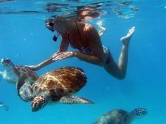 Snorkel with the sea turtles in Barbados
