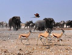 Visit Africa and travel through Botswana, Namibia and Zimbabwe on a tour from Windhoek to Victoria Falls with a mixture of thrilling wildlife encounters and fun local interaction.