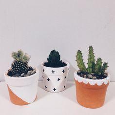 Fiz novas casas pros meus filhotes ✨ #cacti #cactos