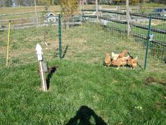 Pature rotation for chickens